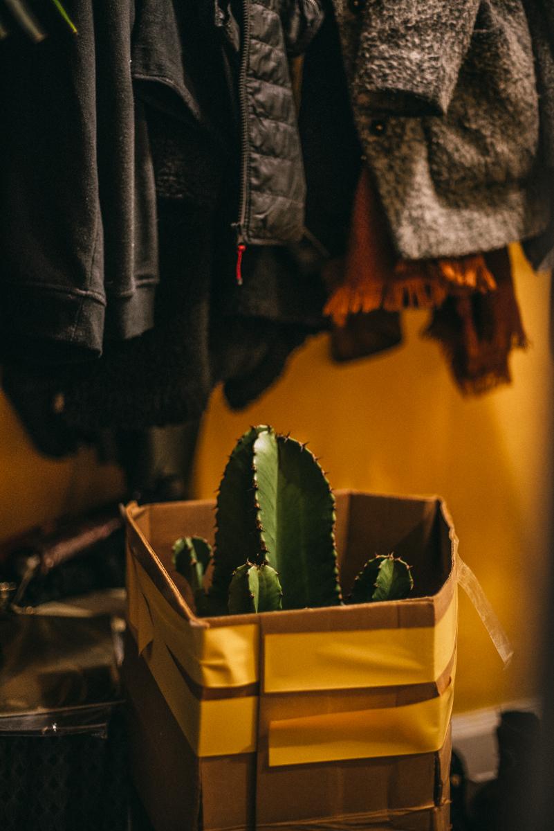 ge bort kaktus i present