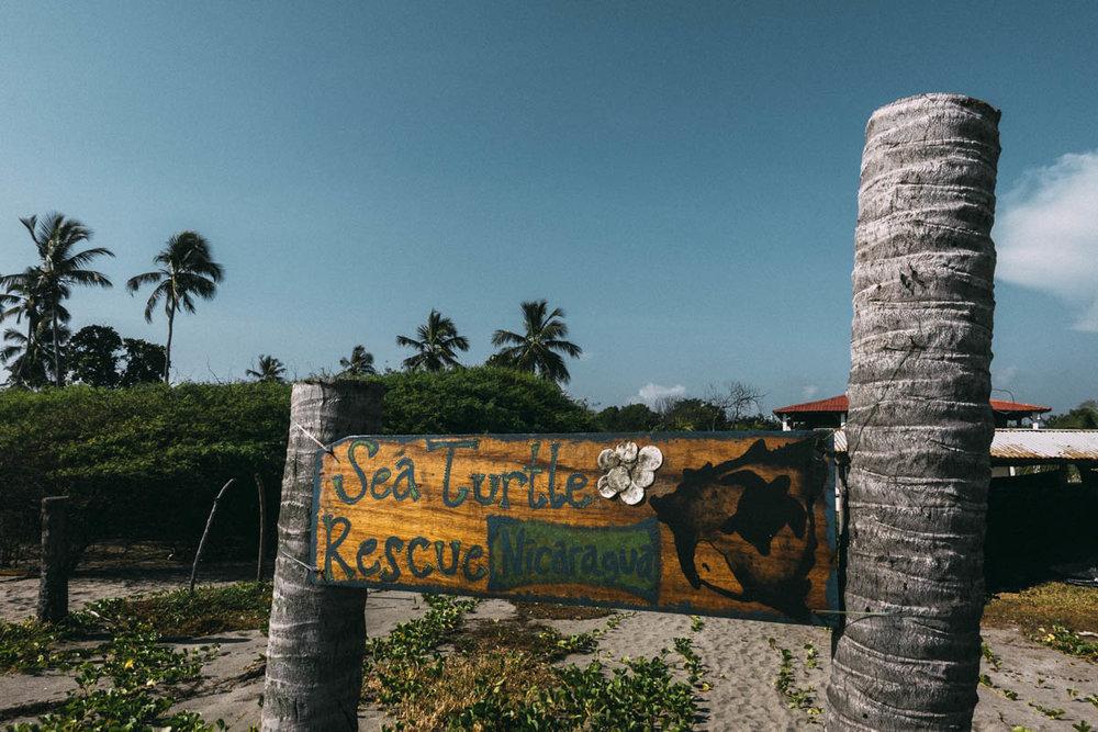 se och rädda havsskölpaddor i Nicaragua påSea turtle rescue i Jiquilillo