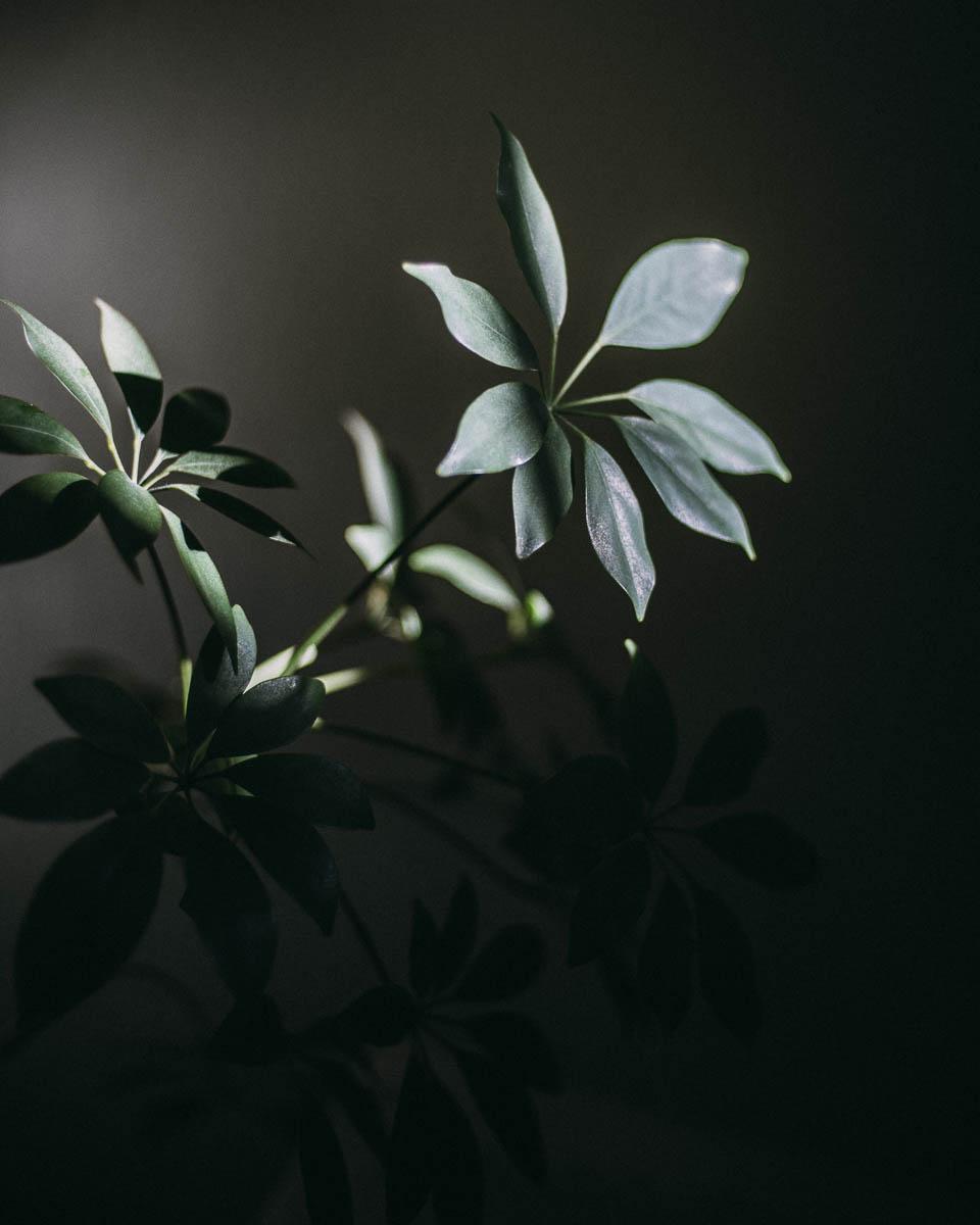 inredning-växter02.JPG