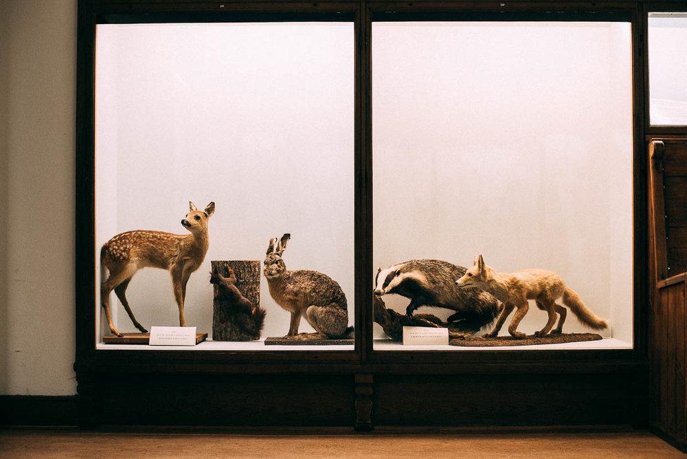 Göteborgs Naturhistoriska museum