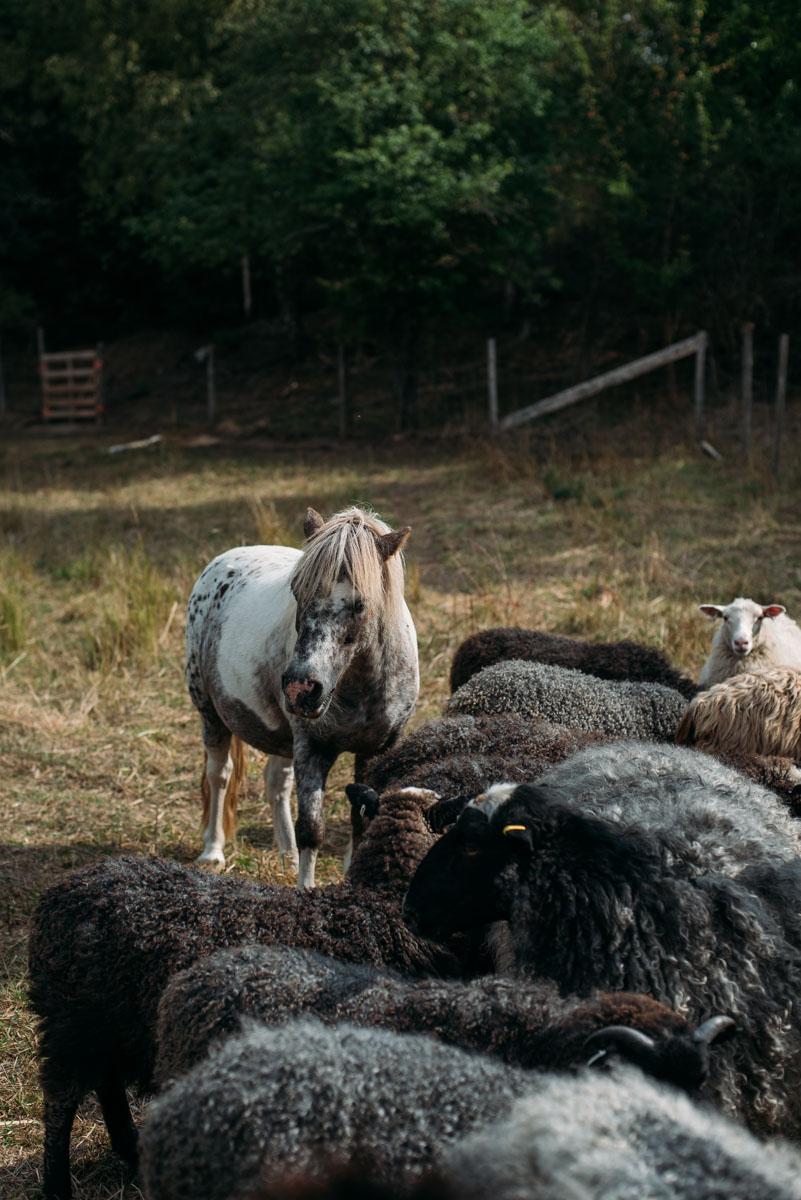 hästar och får på ön lindö under summer workation med influencers of sweden