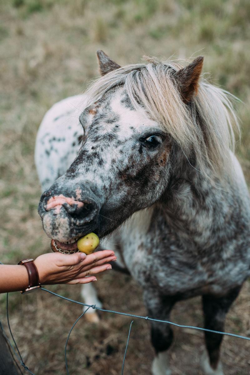 Nathalie Nylén som driver bloggen att leva sin dröm där hon bor på en gård på en ö och jobbar för att leva självförsörjande.