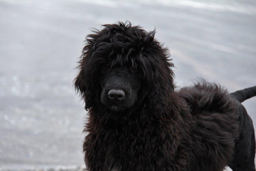 Puppy Amaro