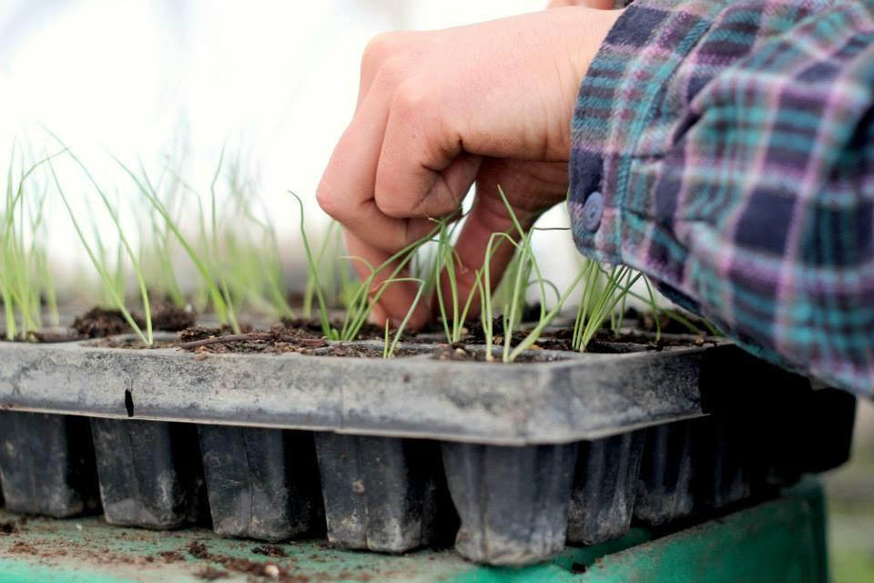 seeding GH hands.jpg