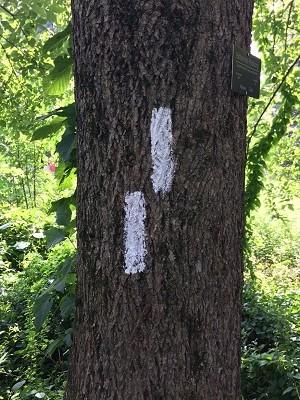 tree blazes1.JPG