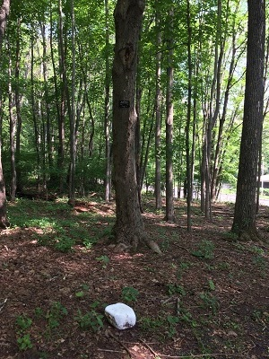 tree marker 2.JPG