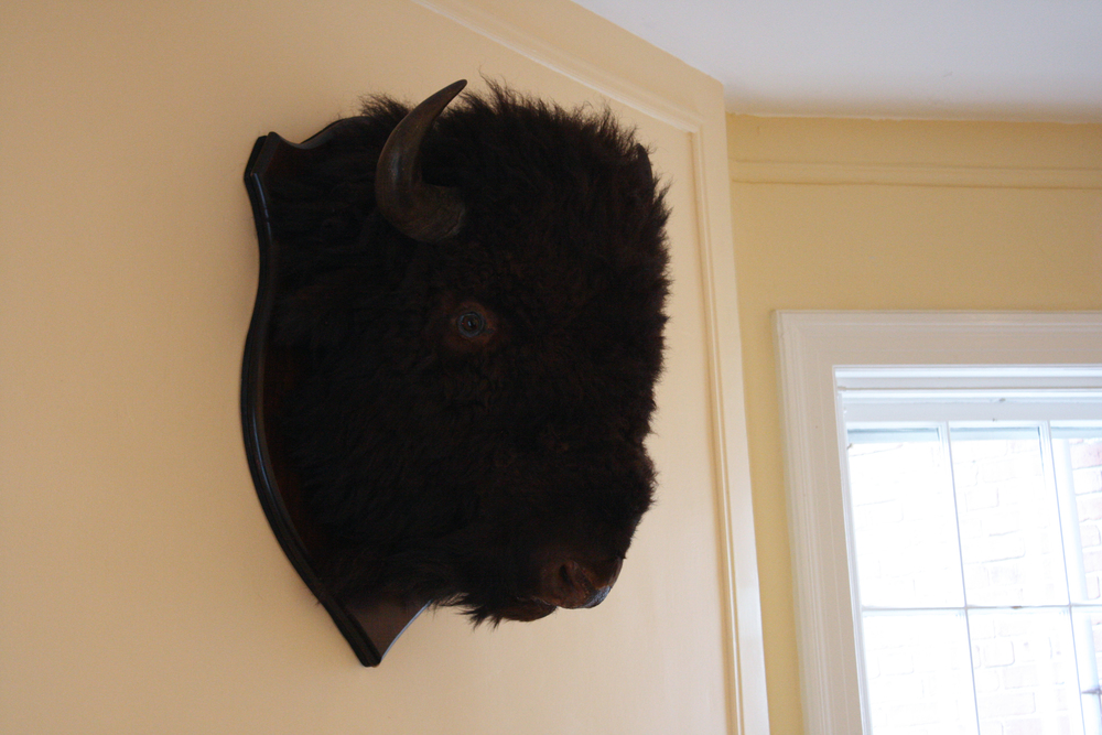 Bison Head, early 20th century