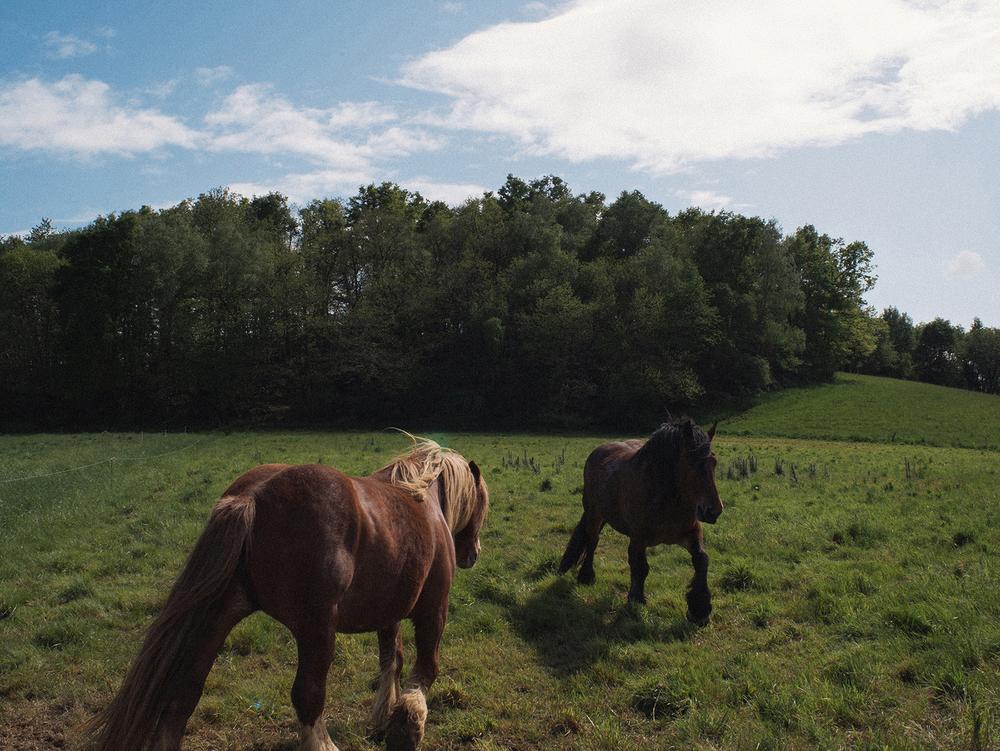 Wild Horses, Pyrenees, 2014