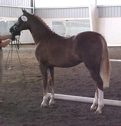 marisporthorseshow20065.jpg
