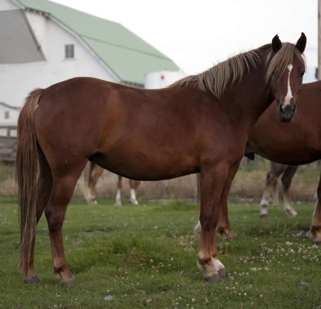 mair_2007b_welsh_pony.jpg