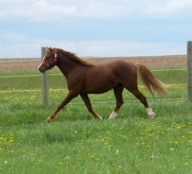 trot left 1 - May 2010 (2) (small)_Copy.jpg