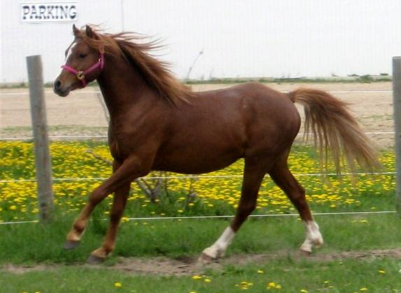 canter left 1 - May 2010 (small)_Copy.jpg
