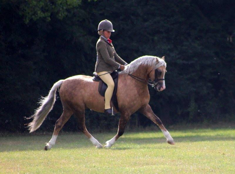 Buzby under saddle.jpg