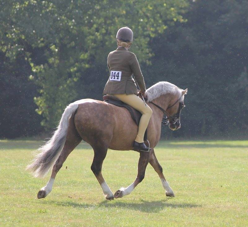 Buzby under saddle.jpg2.jpg