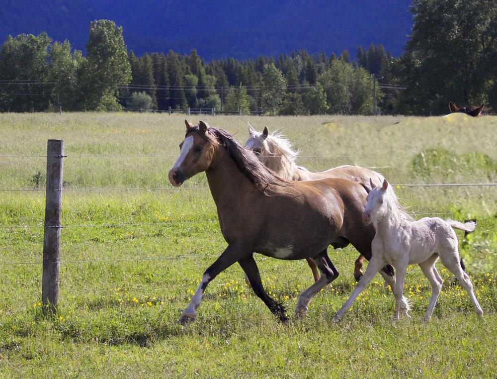 Foal photos June 10 9.jpg