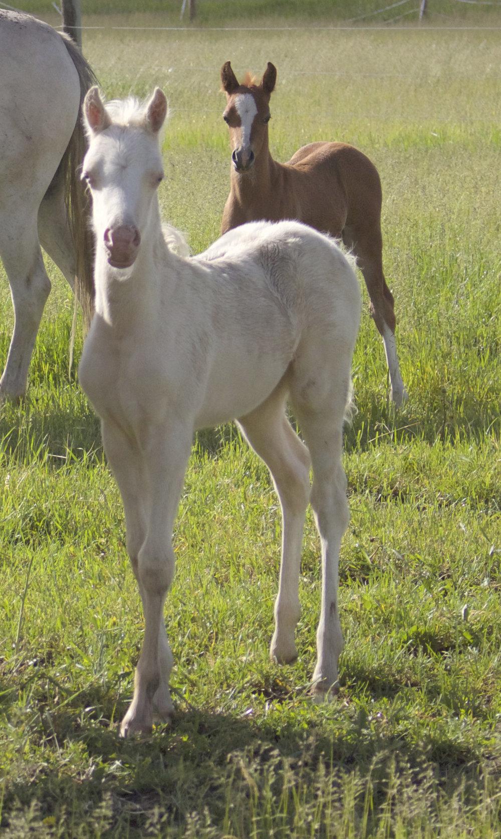Foal photos June 10 158.jpg