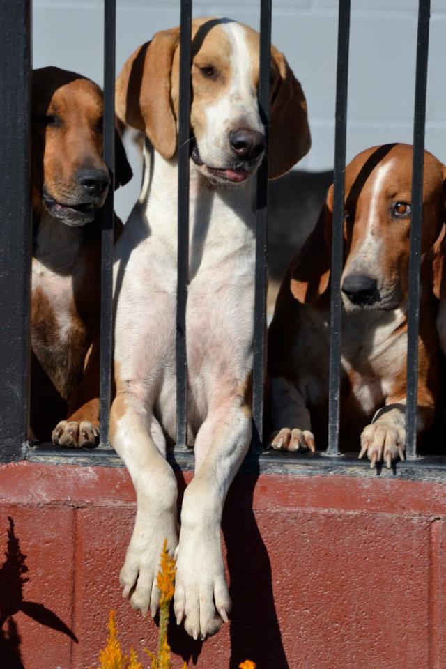 hounds2.jpg