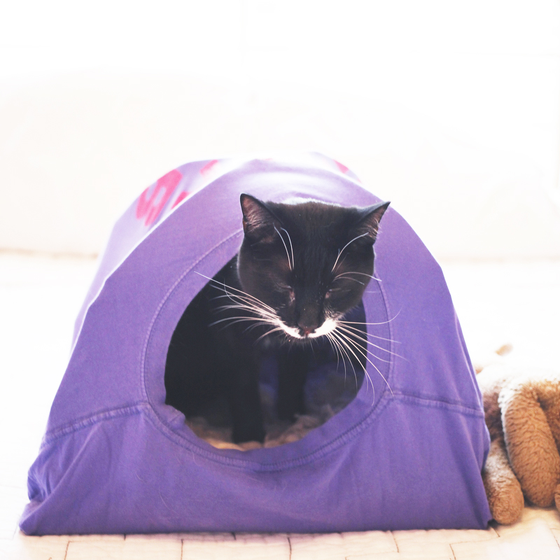 diy t shirt cat tent freckle fair recipes diy