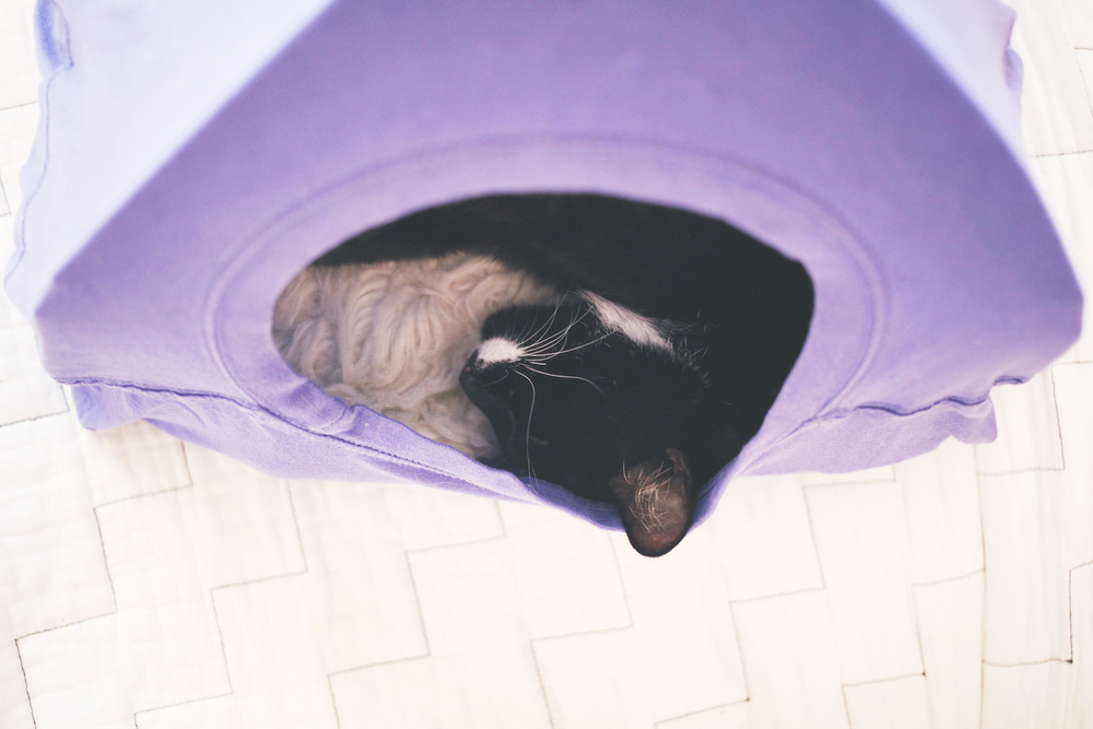 how to make a t-shirt cat tent