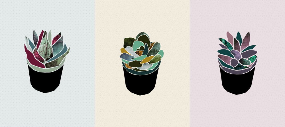Succulents illustration | Freckle & Fair