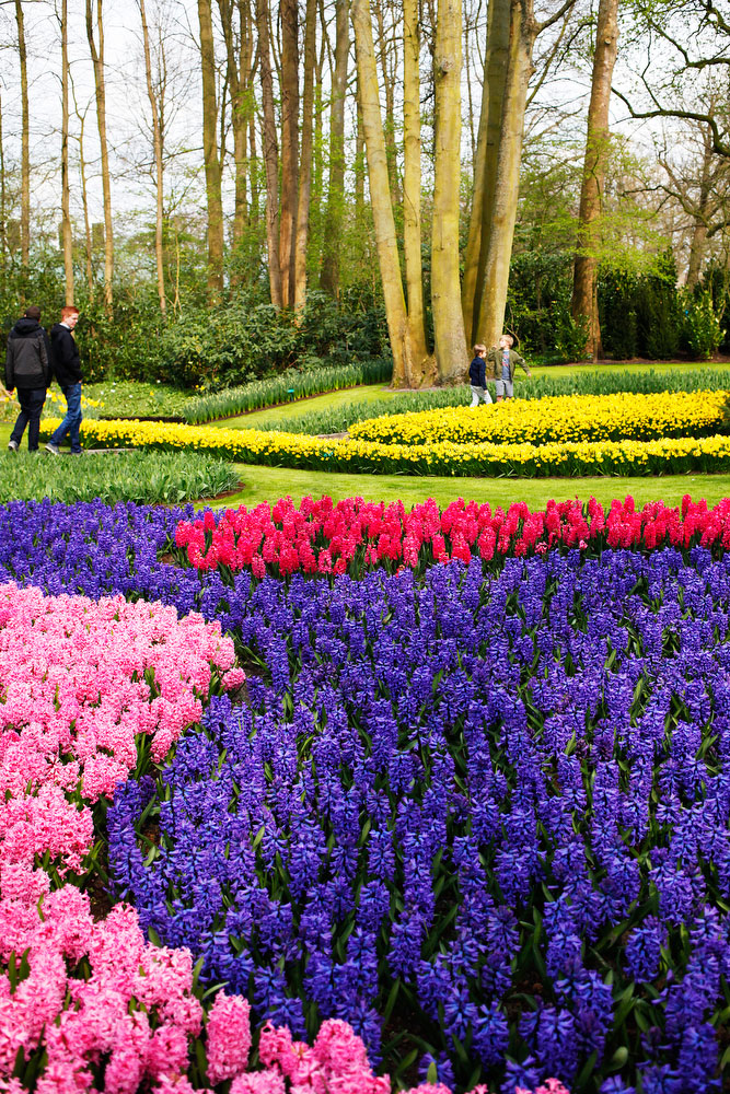 Keukenhof Gardens in the Netherlands | freckleandfair.com