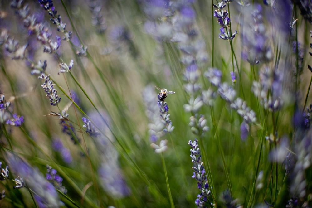 Provence, France | Freckle & Fair