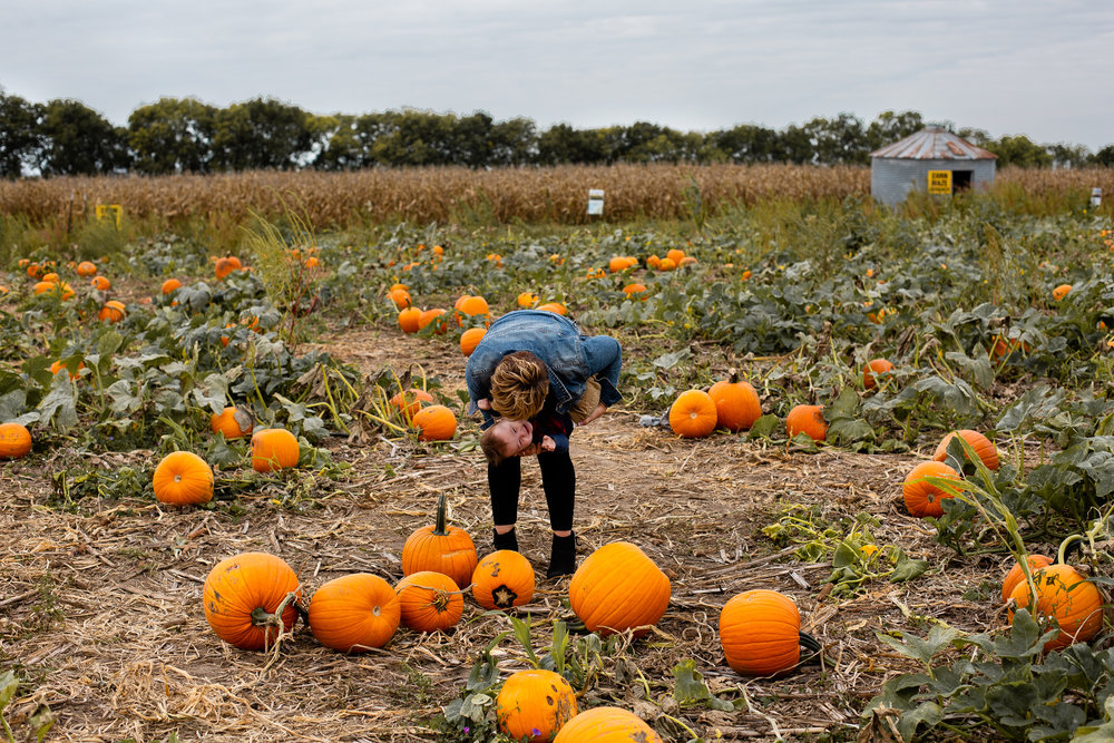 Louisburg pumpkin patch and apple cider