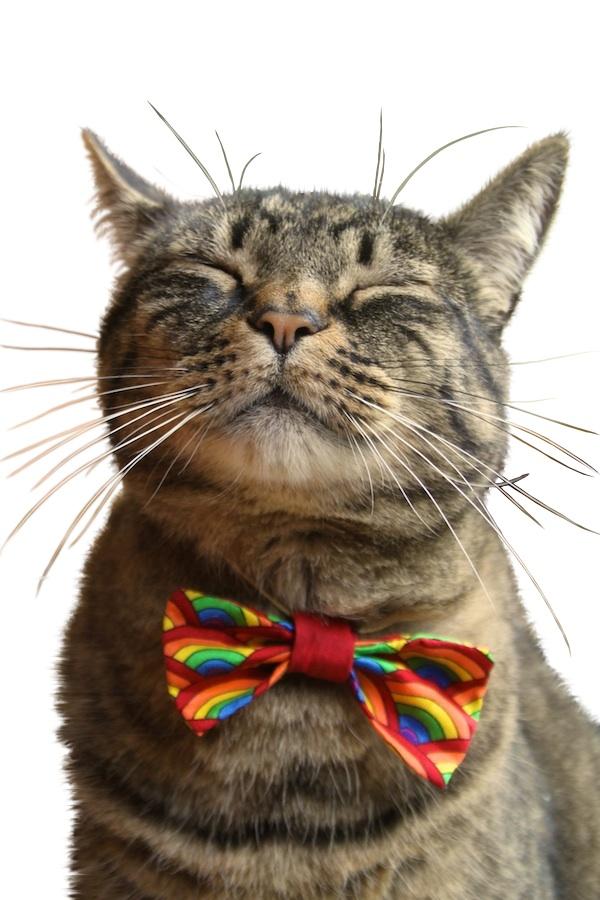 rainbow-cat.jpg