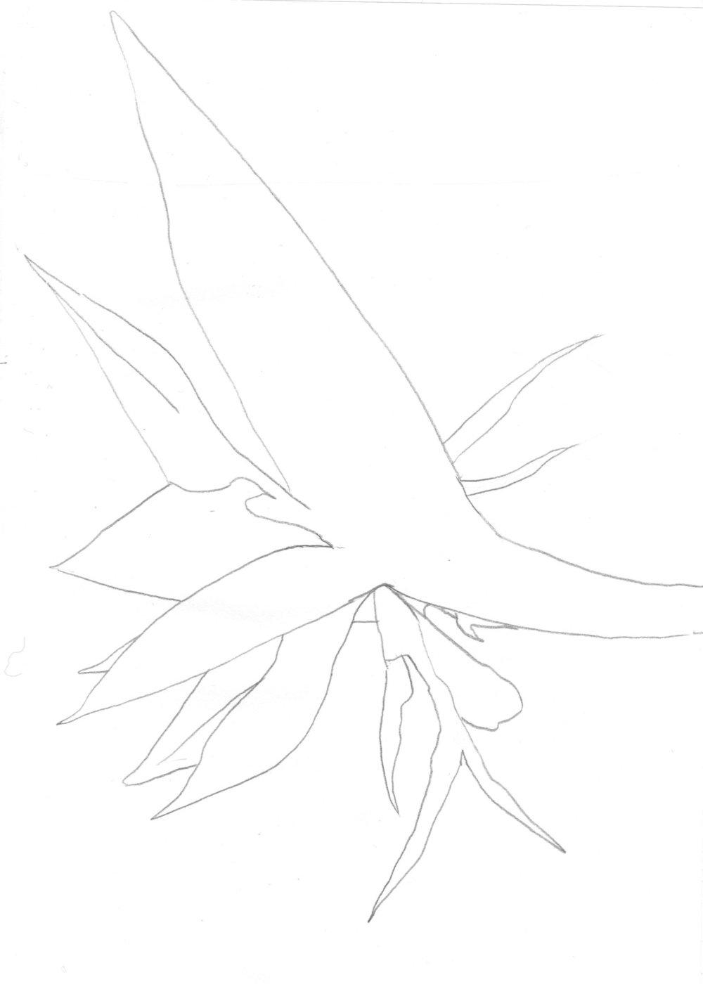 tropflower003.jpg