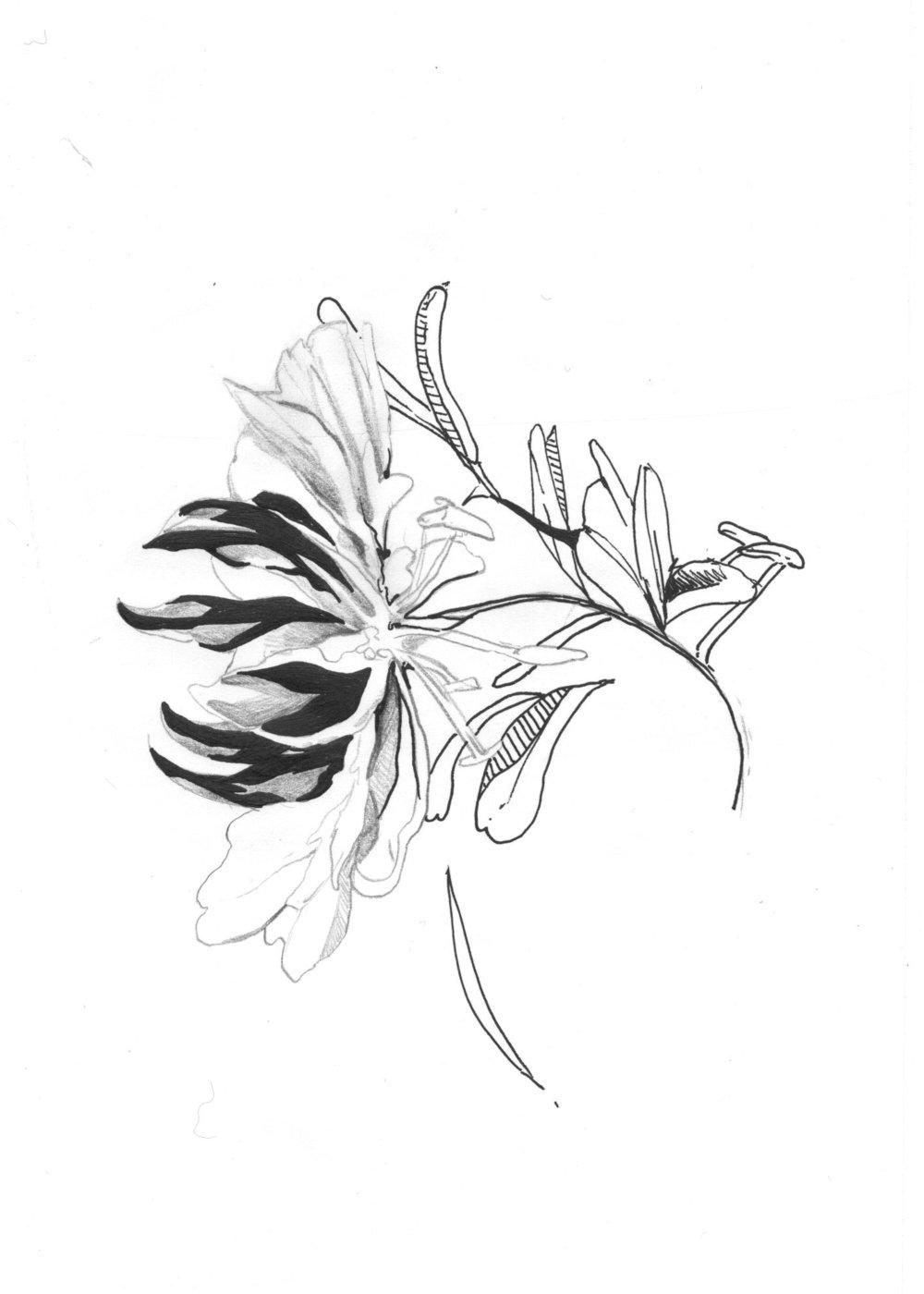 tropflower001.jpg