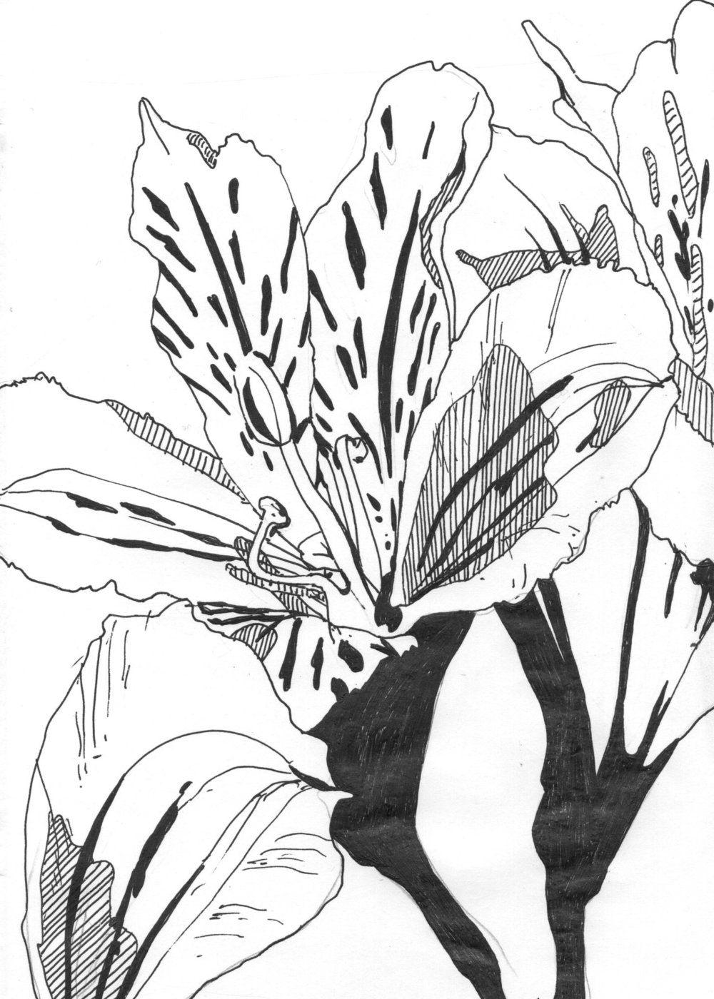 tropflower007.jpg