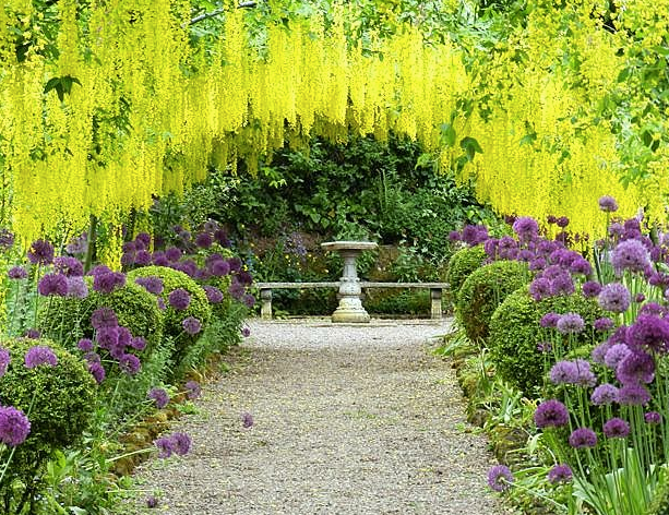 rosemary_verey_laburnum_walk_-_Google_Search.png