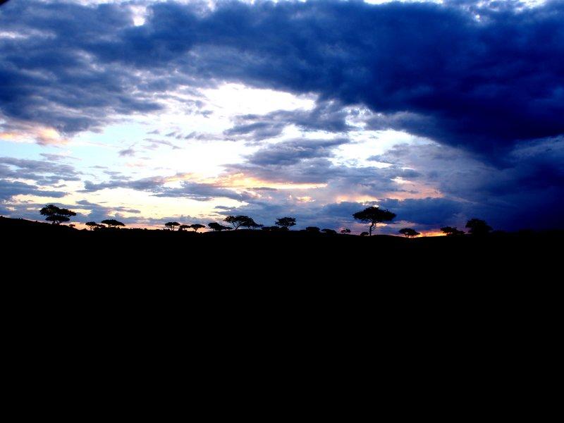 #16- Safari, Tanzania