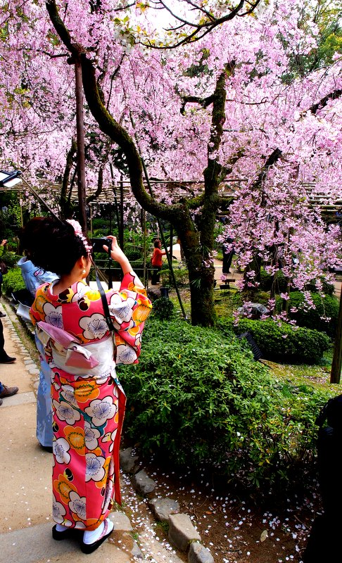Even the locals like to take pics of the cherry trees!
