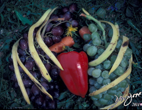 Chest of Fruit Davidoff Art Copyright 2014