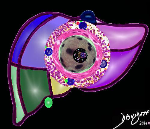 units-cells-lobule-segments-liver