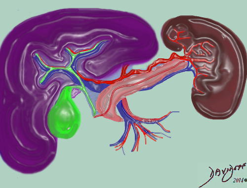 units-liver-gallbladder-pancreas-spleen