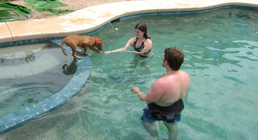 Ginger enjoying the pool with the kids...after they were able to get their suits on and try to show her the pool was fun...she still wants us all on the steps where she can guard us!