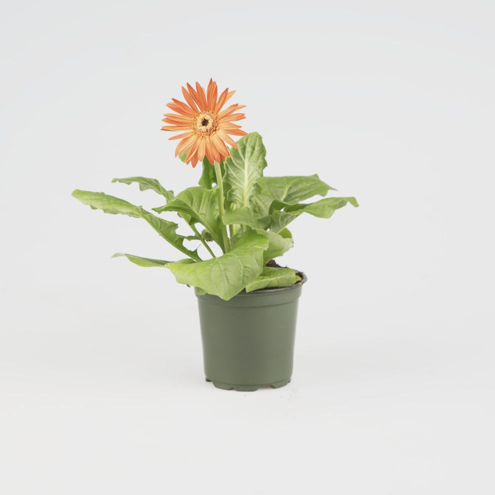 10_Oct_Flower.jpg