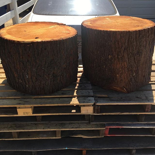 "Up for Grabs!!! 2 large Deodar Cedar logs. Leftover from a tree that was reclaimed in the neighborhood. FREE for anybody that can pick up locally in Los Angeles.  Log 1 is 28"" Dia X 18-20"" Tall Log 2 is 26"" Dia X 21-23"" Tall  Direct Msg me if interested  Thanks!! #reclaimedwood #urbanwood #losangeles #deodarcedar #free #pistoleroguitarworks #pistoleroguitars"
