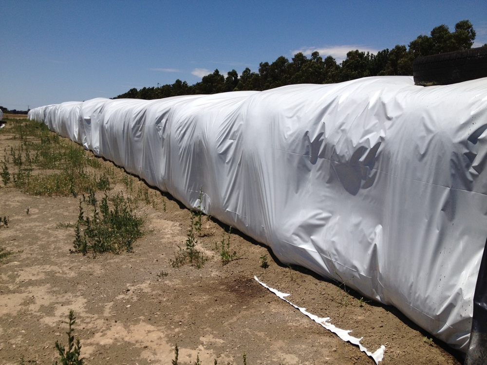 Hyplast Silage Cover over Square bales.jpg