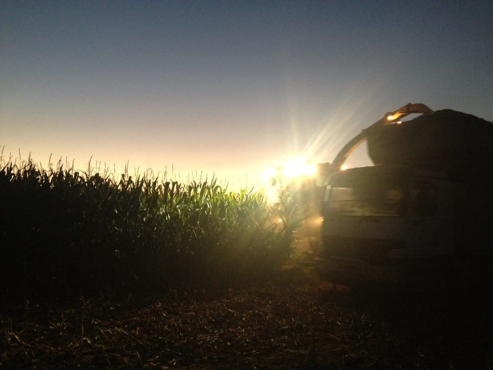 maize harvest by night.jpg
