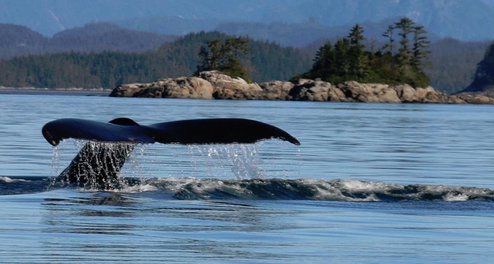 1 whale tale.jpg