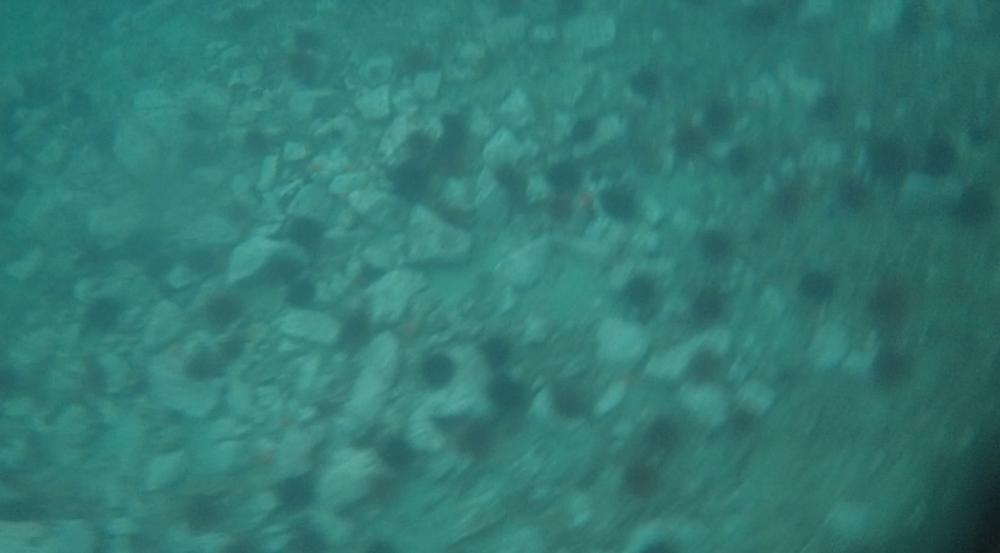 underwater langara island 2 (5).jpg