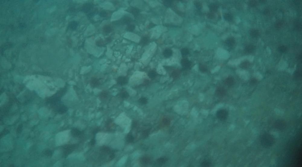 underwater langara island 2 (4).jpg
