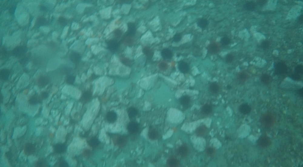 underwater langara island 2 (6).jpg