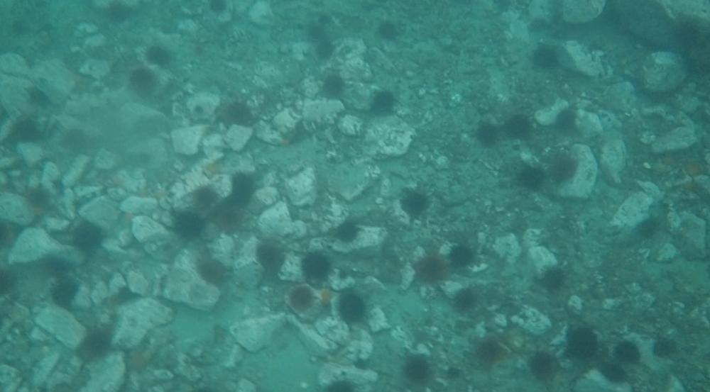 underwater langara island 2 (8).jpg