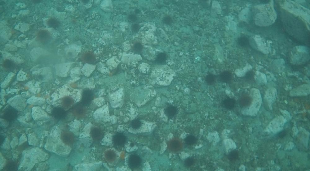 underwater langara island 2 (10).jpg
