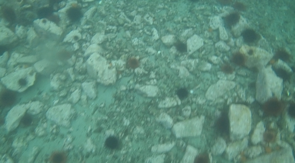underwater langara island 2 (14).jpg