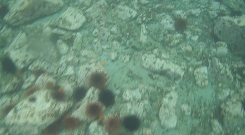 underwater langara island 2 (18).jpg